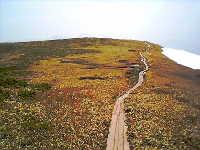 巻機山山頂付近の木道