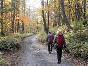 紅葉の林道