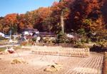 晩秋・山麓の収穫風景